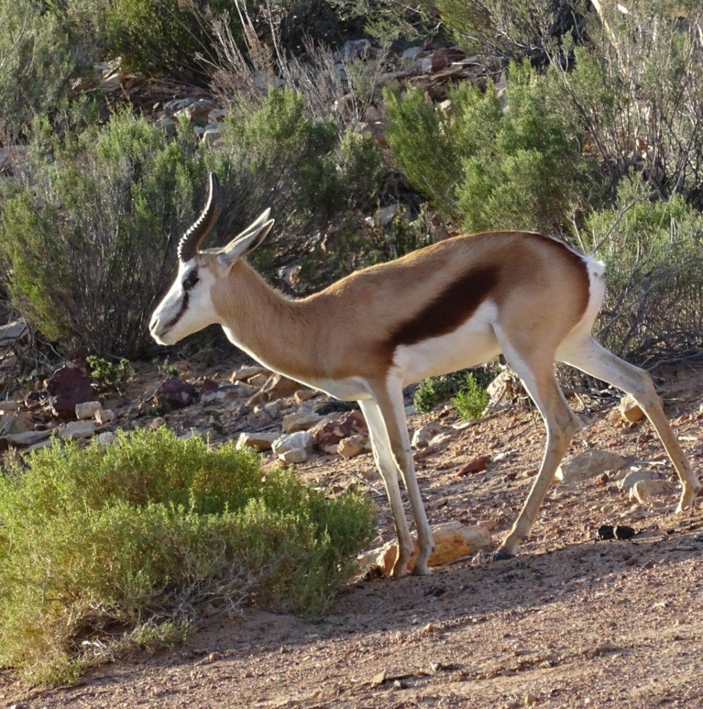Safári Aquila Game Reserve